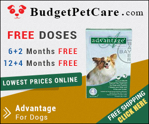Advantage is a fast action flea treatment for dogs. Easy to apply, this topical solution kills almost 100% fleas within 12 hours. Order Advantage from budgetpetcare.com to get big discounts!