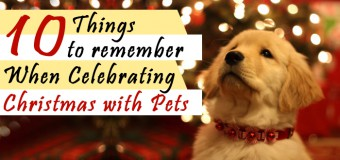 10 Things to Remember When Celebrating Christmas with Pets