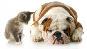 Pet's Joint Care