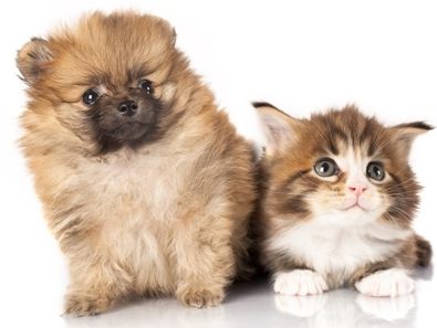 Improve Your Pet's Health with Multivitamins and Minerals