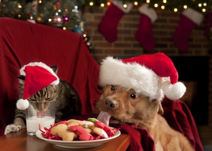 Christmas-Pet-Coupons