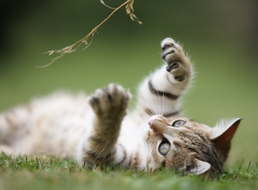Top Five Ways to Help Your Aging Cat with Arthritis