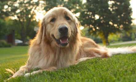 Health Problems in Senior Dogs