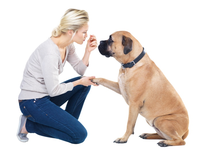Signs and symptoms of arthritis in dogs