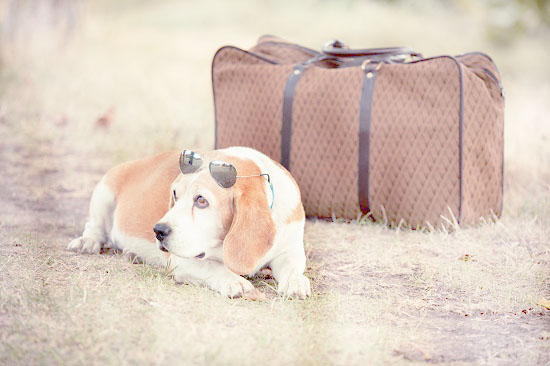 Tips for travelling with pet