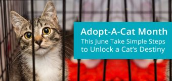 Adopt-a-Cat Month: This June Take Simple Steps to Unlock a Cat's Destiny