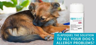 Is Apoquel the Solution to All Your Dog's Allergy Problems?