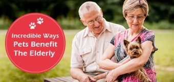 How Pets Benefit Elderly?