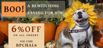 Halloween Celebration And Savings On Pet Supplies