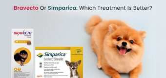 Bravecto Or Simparica: Which Treatment Is Better?