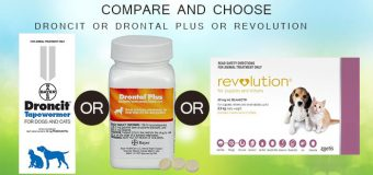 COMPARE AND CHOOSE: DRONCIT OR DRONTAL PLUS OR REVOLUTION