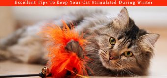 Excellent Tips To Keep Your Cat Active & Stimulated During Winter