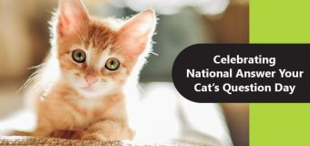 Celebrating National Answer Your Cat's Question Day