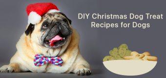 DIY Christmas Dog Treat Recipes for Dogs