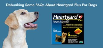 Debunking Some FAQs About HeartGard Plus For Dogs