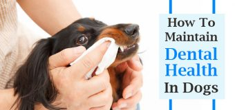 How To Maintain Dental Health In Dogs