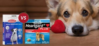 Heartgard Plus vs. Nuheart: A Comparison Between Dog Heartwormers