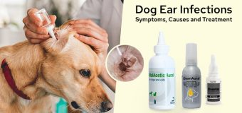 Dog Ear Infections: Symptoms, Causes and Treatment