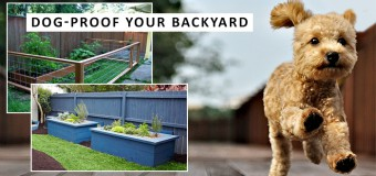 Five Basic Tips To Dog-Proof Your Backyard