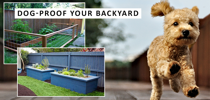 dog proof your backyard