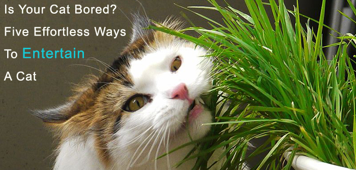 Tips To Keep Your Cat Entertained