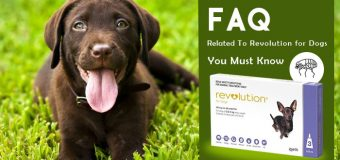 Frequently Asked Questions Related To Revolution for Dogs You Must Know