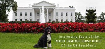 Interesting Facts Of The Most Famous First Dogs Of The US Presidents At White House