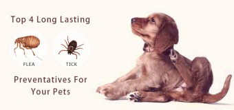 Top 4 Long Lasting Flea And Tick Preventatives For Your Pets