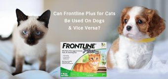 Can Frontline Plus for Cats Be Used On Dogs and Vice Versa?
