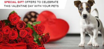 Special Gift Offers To Celebrate This Valentine Day With Your Pet