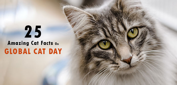 Amazing Cat Facts On Global Cat Day