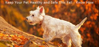 Keep Your Pet Healthy and Safe This Fall – Know How