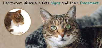 Heartworm Disease in Cats: Signs and Their Treatment