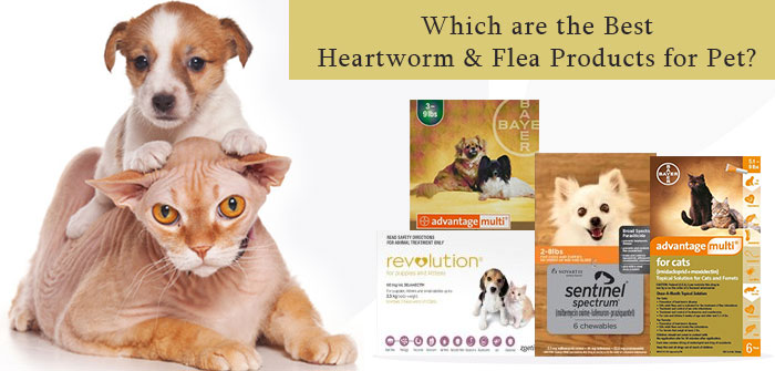 Best Heartworm & Flea Products for Pet