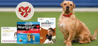 Heartworm Preventions for Dogs: Heartgard Vs Sentinel Vs Revolution