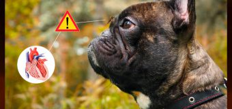 Prevention of Heartworm Disease in Pets: Less Stressful Than Treatment