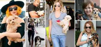 6 Hollywood Celebrities That Love Dogs A Lot