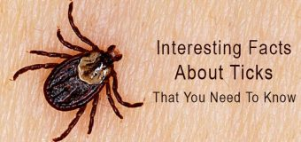 Interesting Facts About Ticks – That You Need To Know
