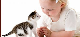 Helping Kids To Take Care Of A Newly Adopted Pet Kitten