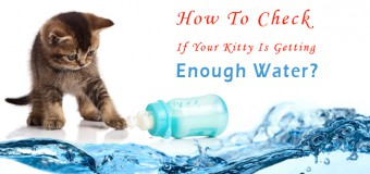 How To Check If Your Kitty Is Getting Enough Water?