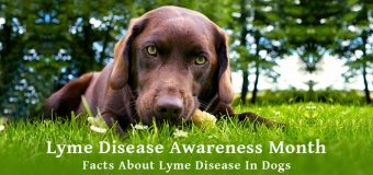 Lyme Disease Awareness Month: 5 Facts About Lyme Disease in Dogs