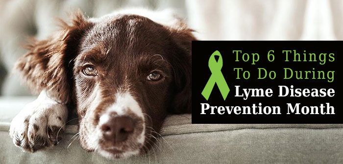 Lyme Disease Prevention Month