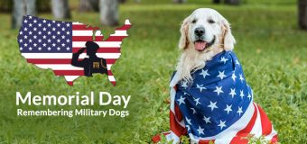 Memorial Day: Remembering Military Dogs