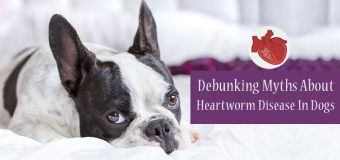 Debunking Myths About Heartworm Disease In Dogs