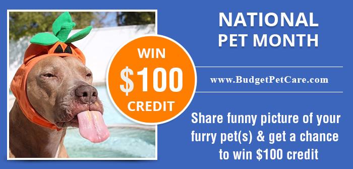 BPC-National-pet-month-win