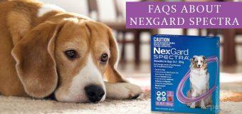 FAQs About Nexgard Spectra