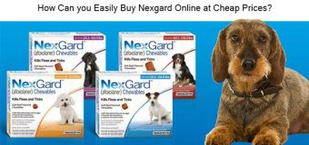 How Can you Easily Buy Nexgard Online at Cheap Prices?