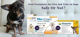 Bravecto, Nexgard And Simparica: Oral Treatments For Flea And Ticks In Dogs Safe Or Not?