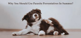 Why you should use Parasite Preventatives in Summer?