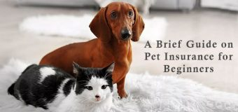 A Brief Guide on Pet Insurance for Beginners